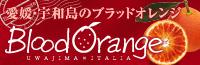 愛媛・宇和島のブラッドオレンジBloodOrange