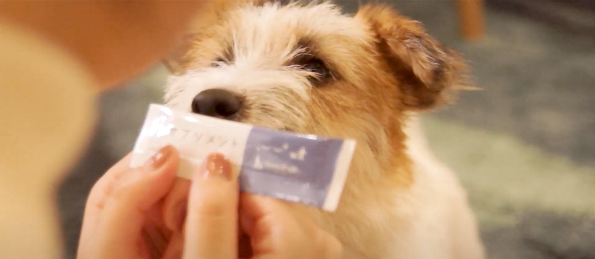 犬サプリメント【おためし6本入りパック】