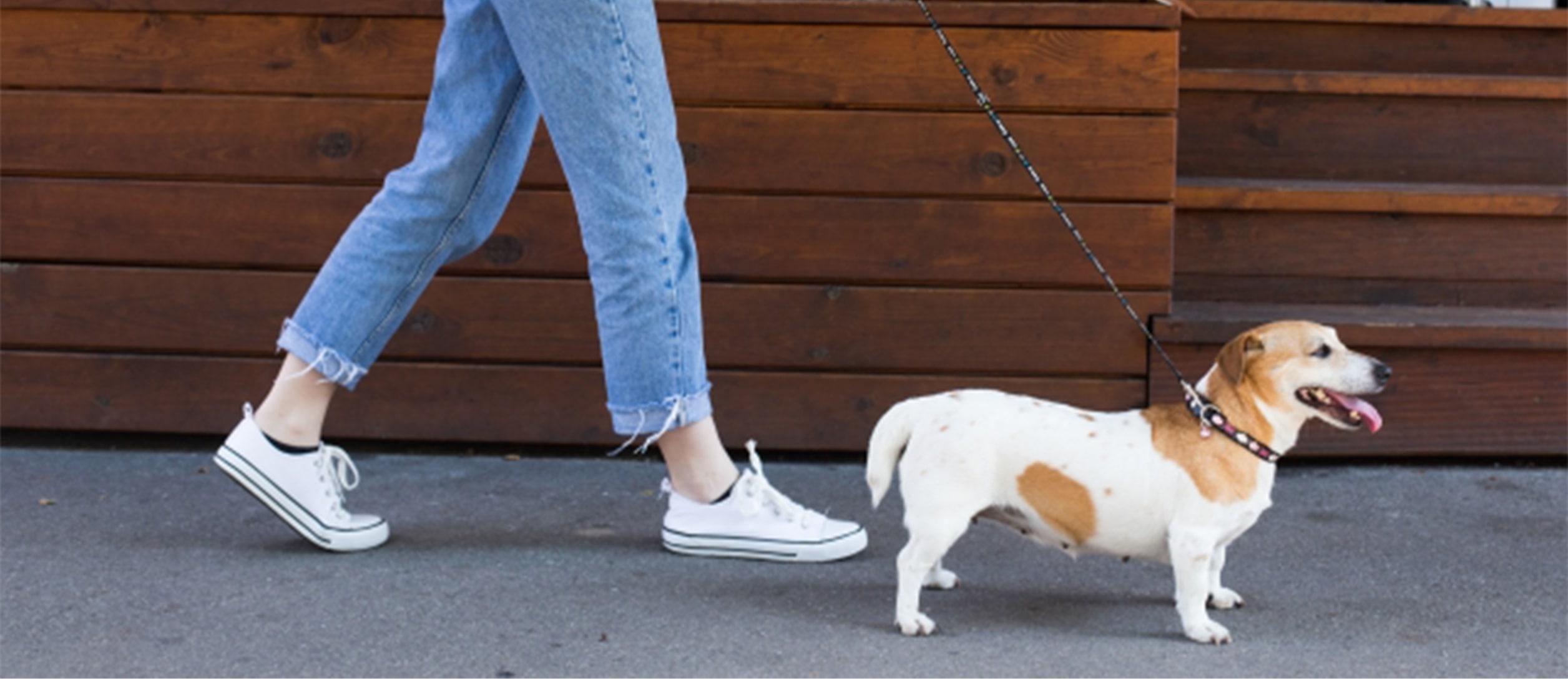 犬サプリメント3種類