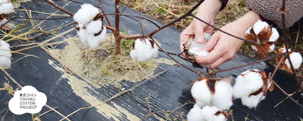オーガニックコットン100%綿毛布